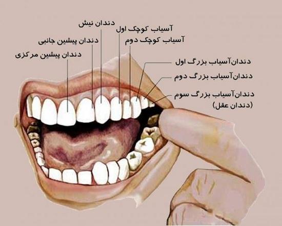 دندان شماره ۷